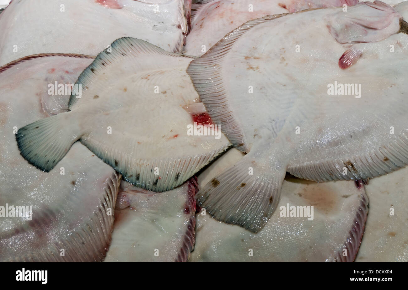 Close-up of Flatfish at Billingsgate Fish Market, Isle of Dogs, London, England, UK - Stock Image