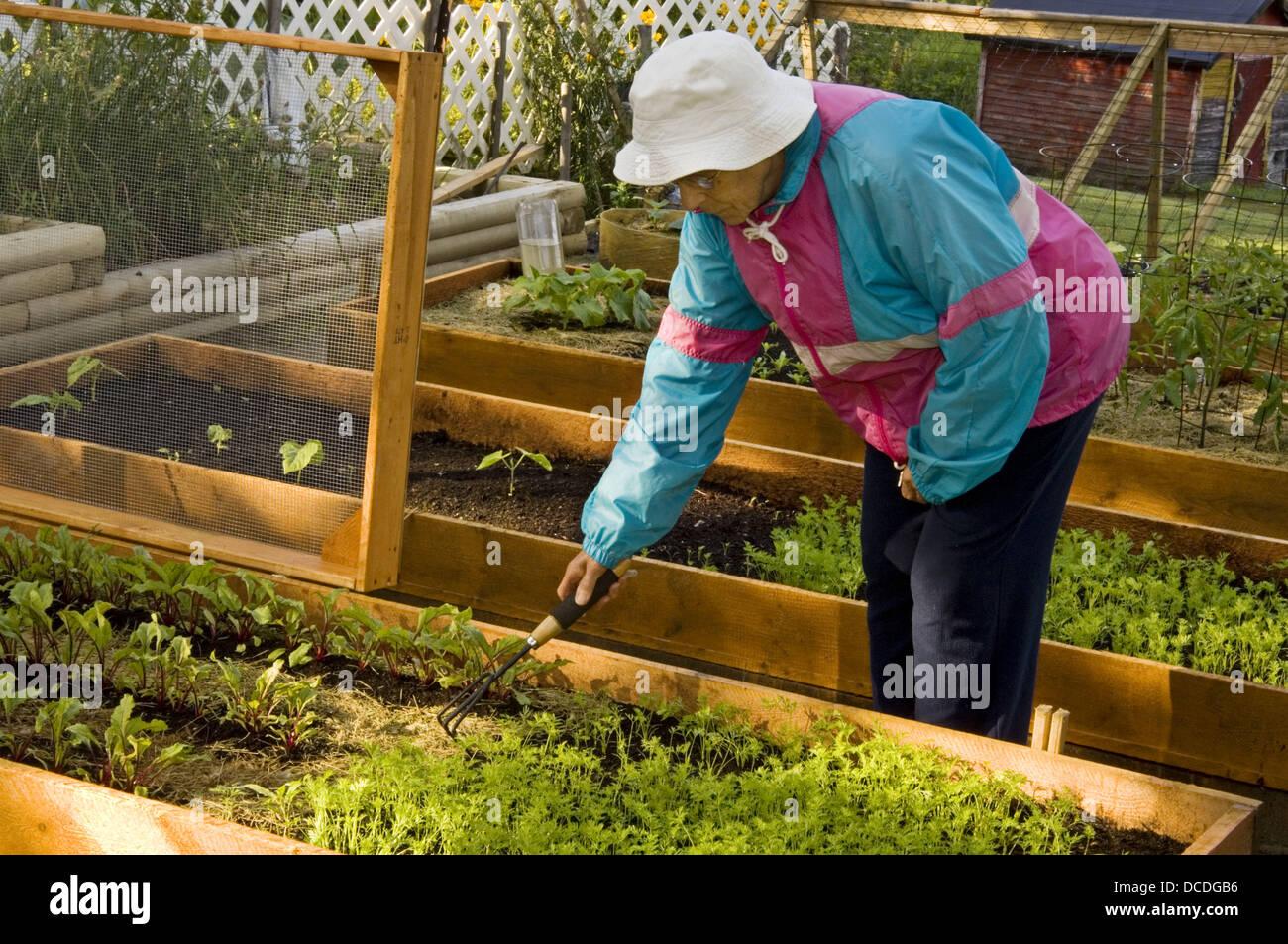 Mrs Lil Punkari (age 83) tends her Lasagne Vegetable Garden- raised ...