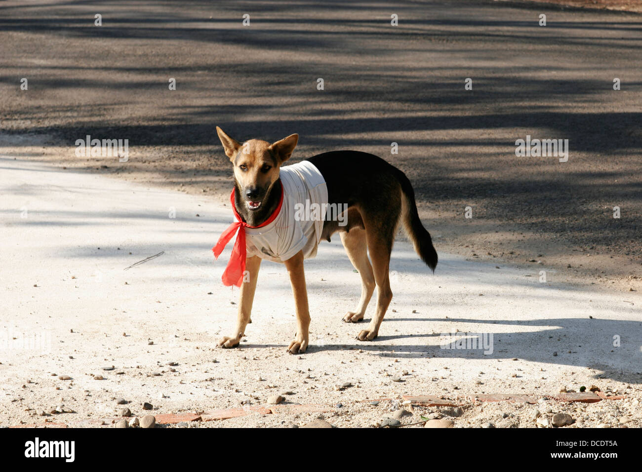 A dog wearing red tie, Laos - Stock Image