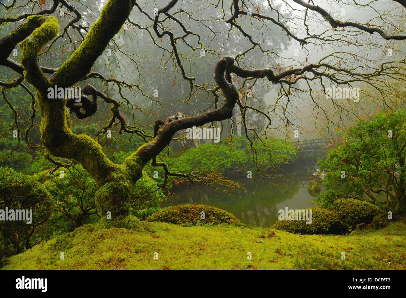 Japanese Maple Winter Portland Japanese Garden Portland Oregon