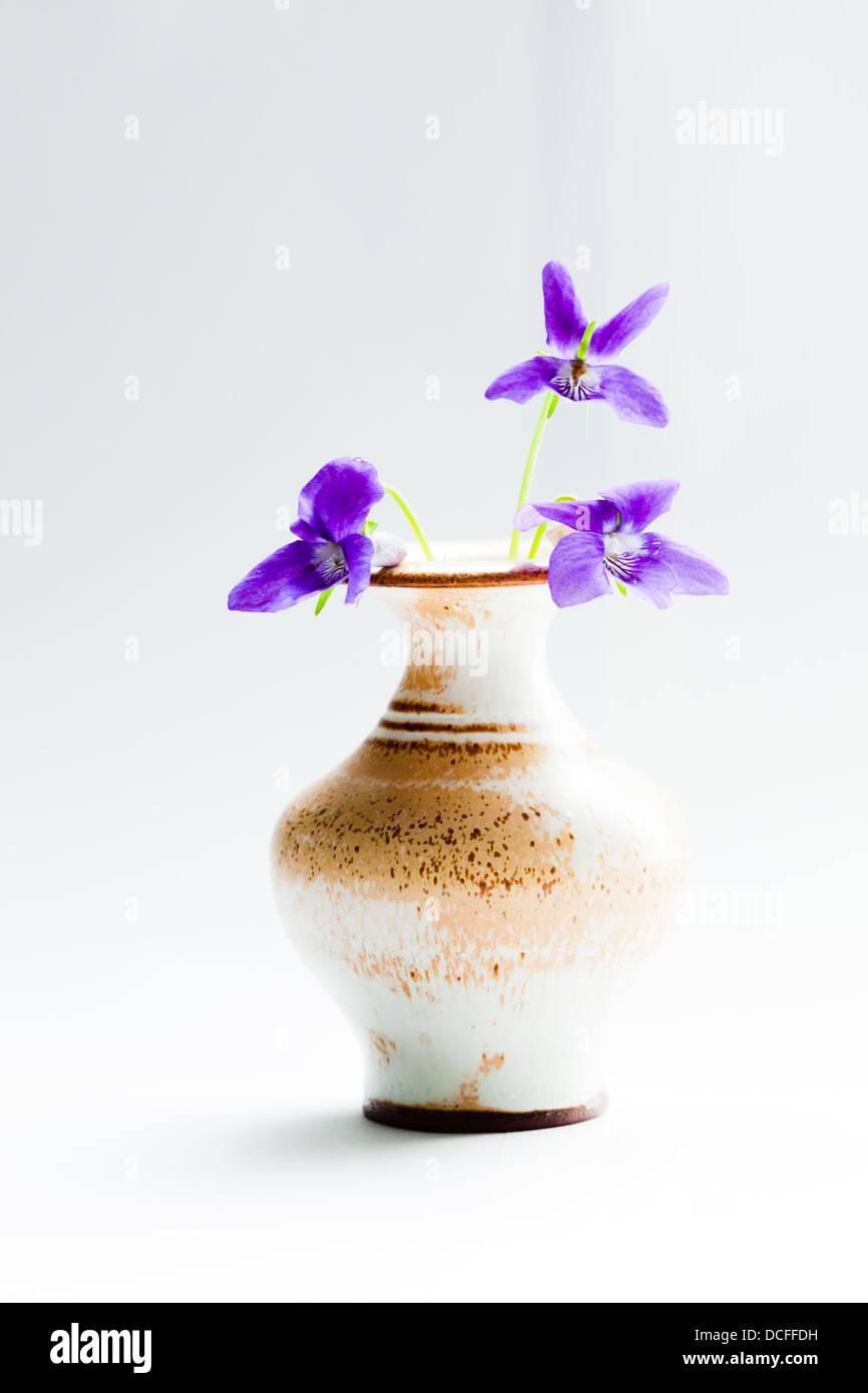 Viola reichenbachiana (Garden Violet in a vase) - Stock Image