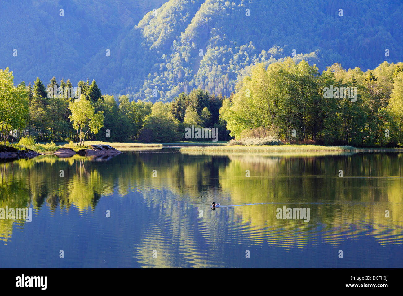 Tranquil scene with trees reflected in ripples on Lake Haukeland in early morning in summer near Bergen, Hordaland, - Stock Image