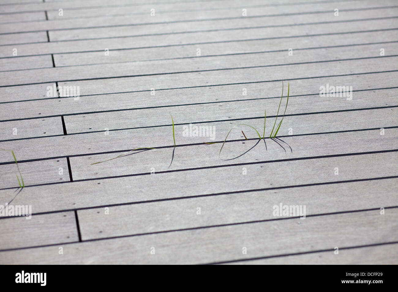 grass growing through wooden boards - Stock Image