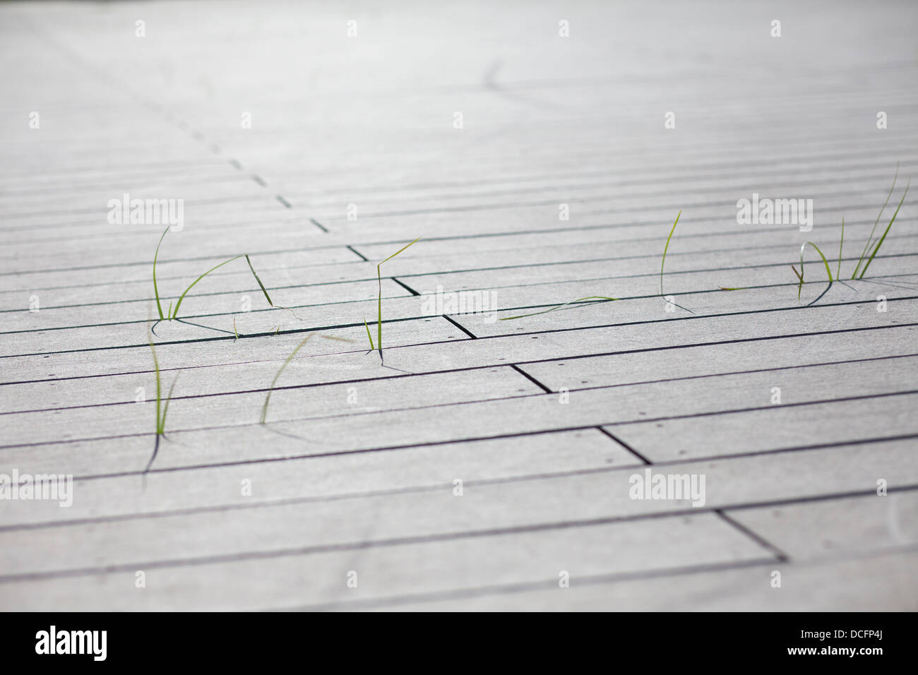 grass through wooden boards - Stock Image