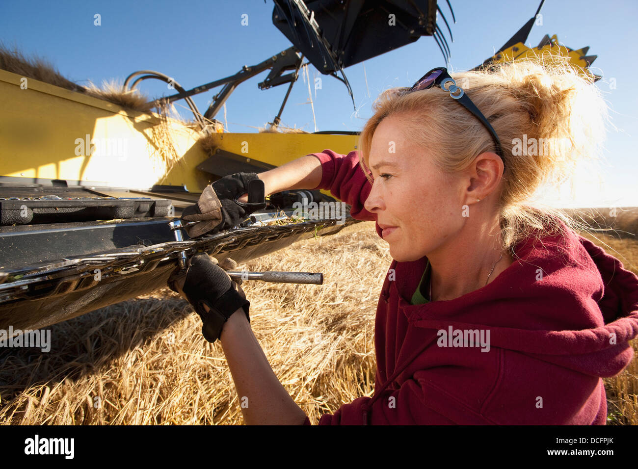 A Woman Works On A Combine In A Wheat Field; Three Hills, Alberta, Canada - Stock Image
