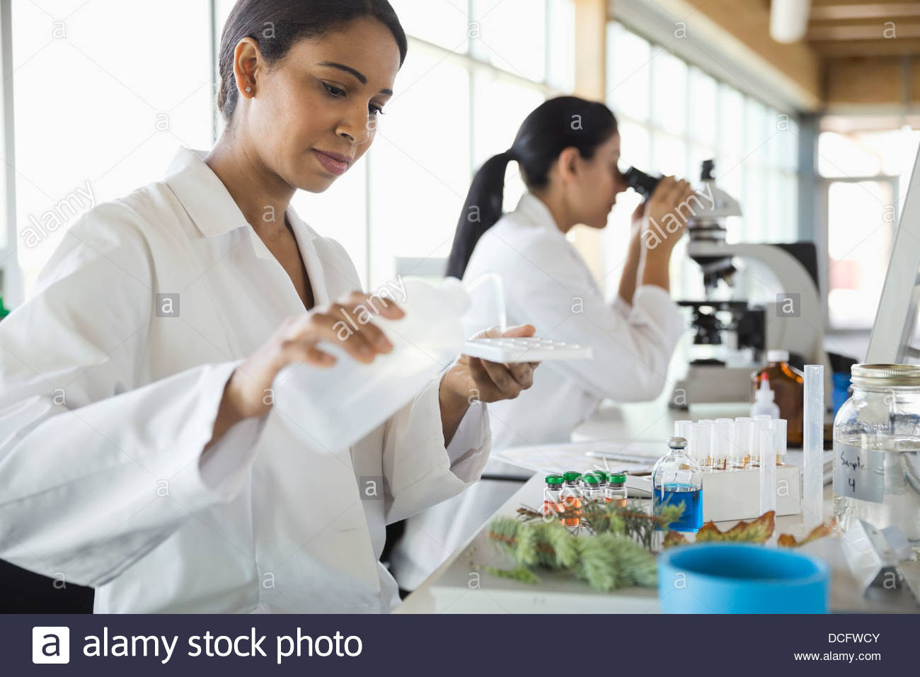Botanists working in laboratory - Stock Image