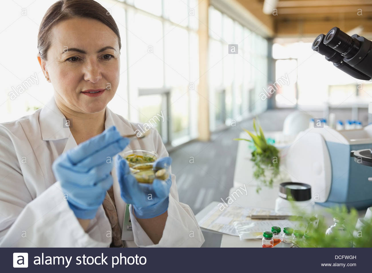 Female botanist working in laboratory - Stock Image