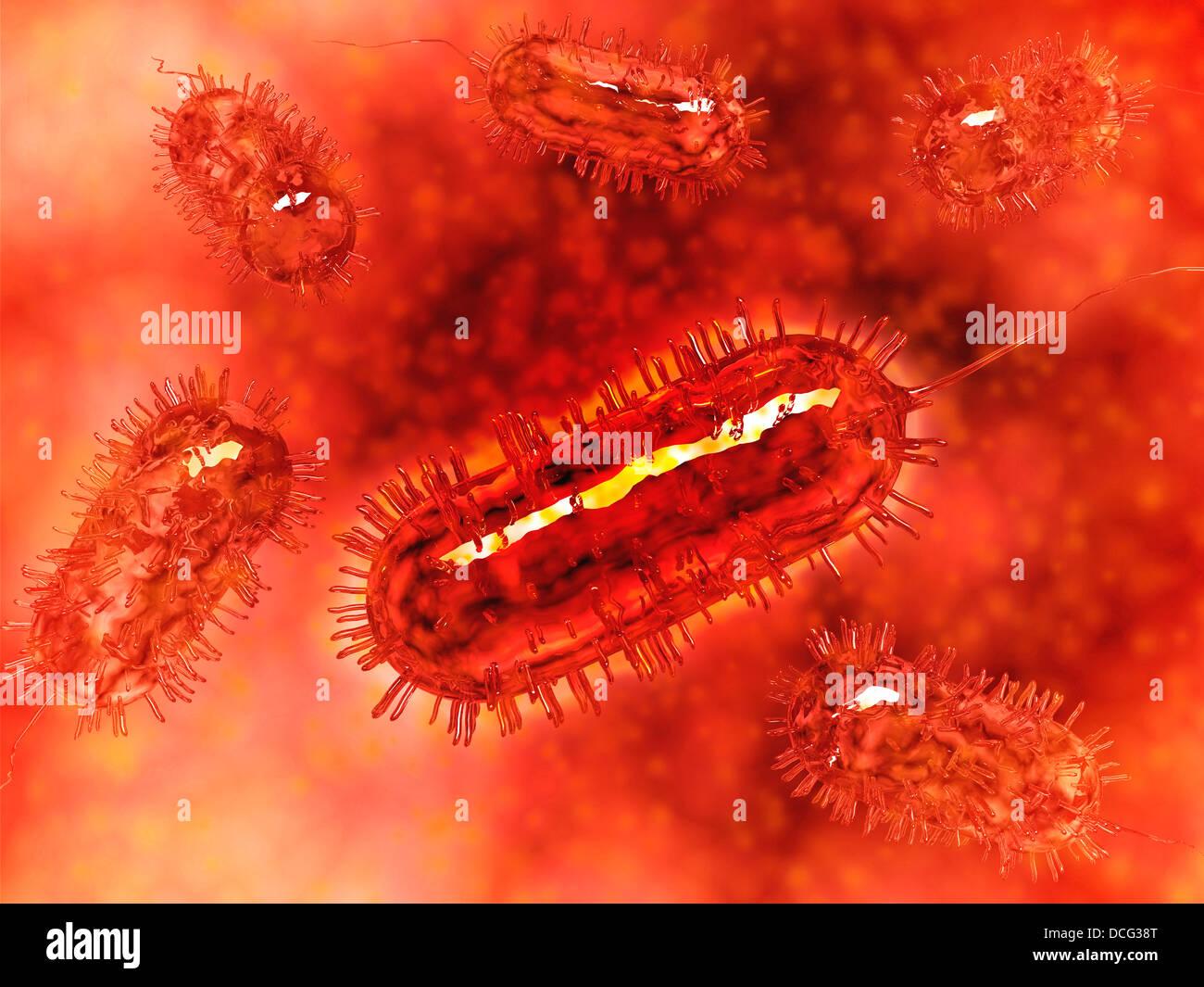 Group of Escherichia coli bacteria cells, known as E. Coli. - Stock Image