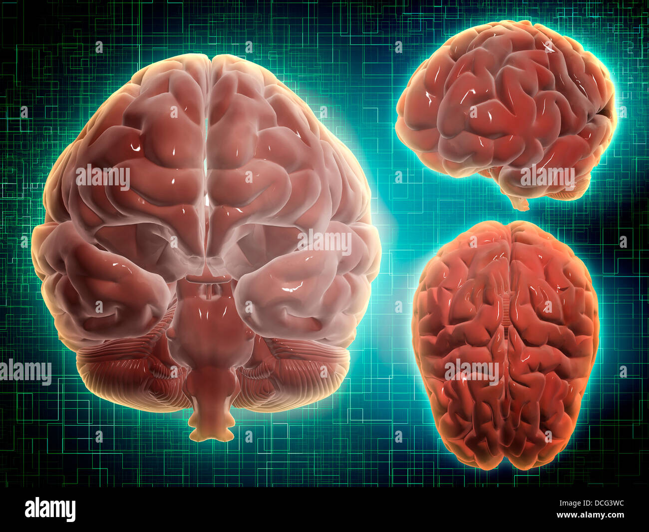 Conceptual image of human brain at different angles. - Stock Image
