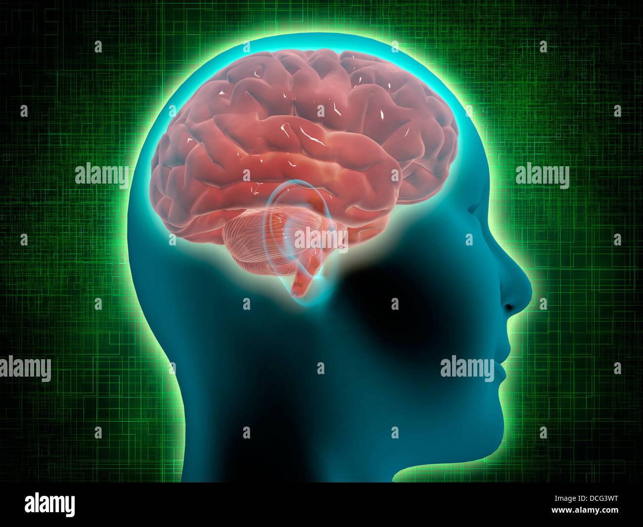 Conceptual image of female body with brain, side view. - Stock Image