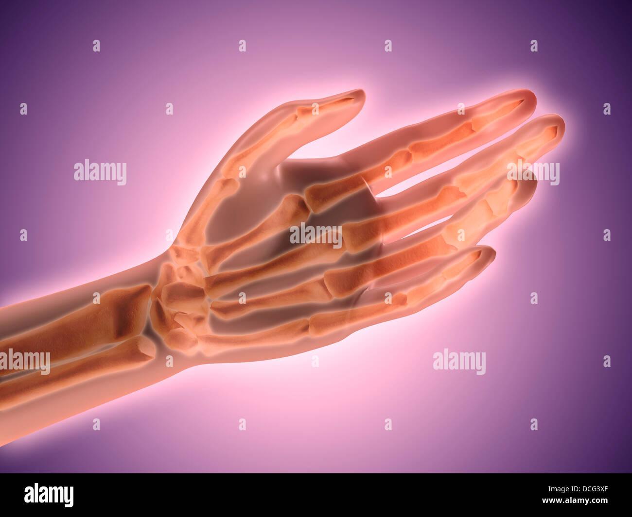Conceptual image of bones in human hand. - Stock Image