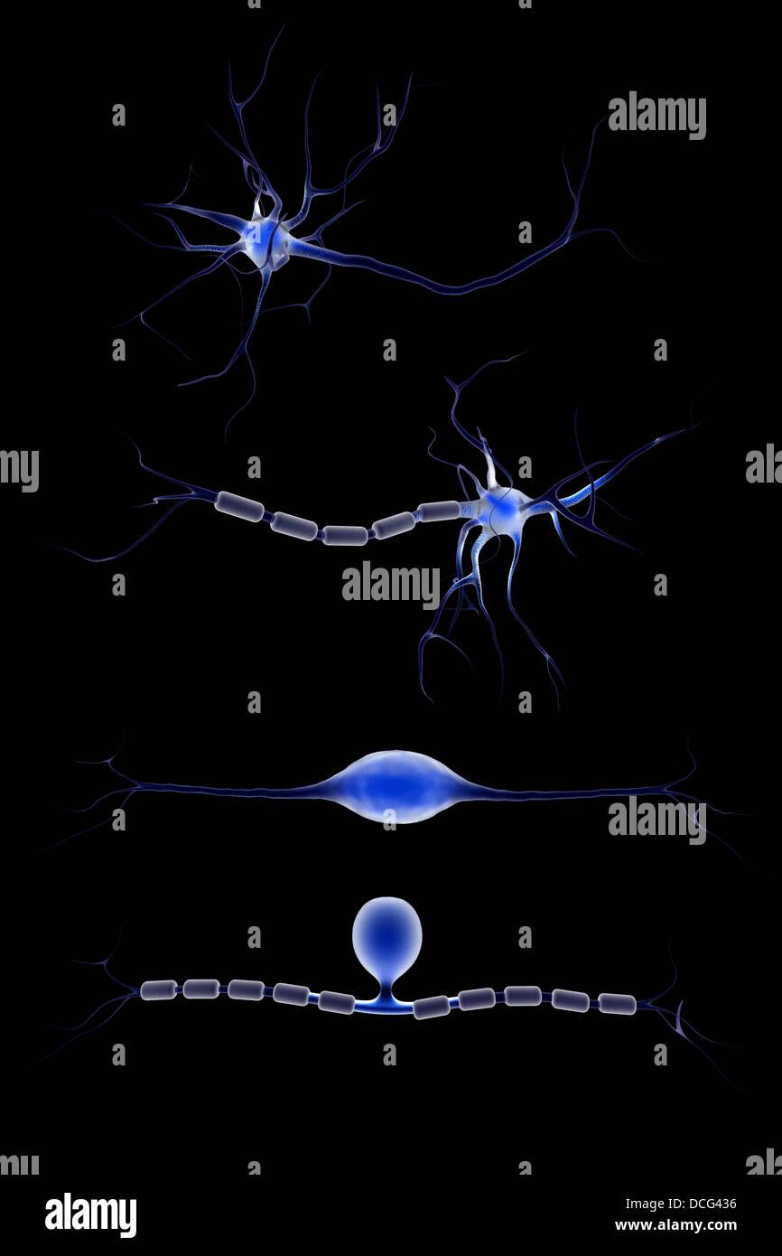 Conceptual image of a neuron. - Stock Image