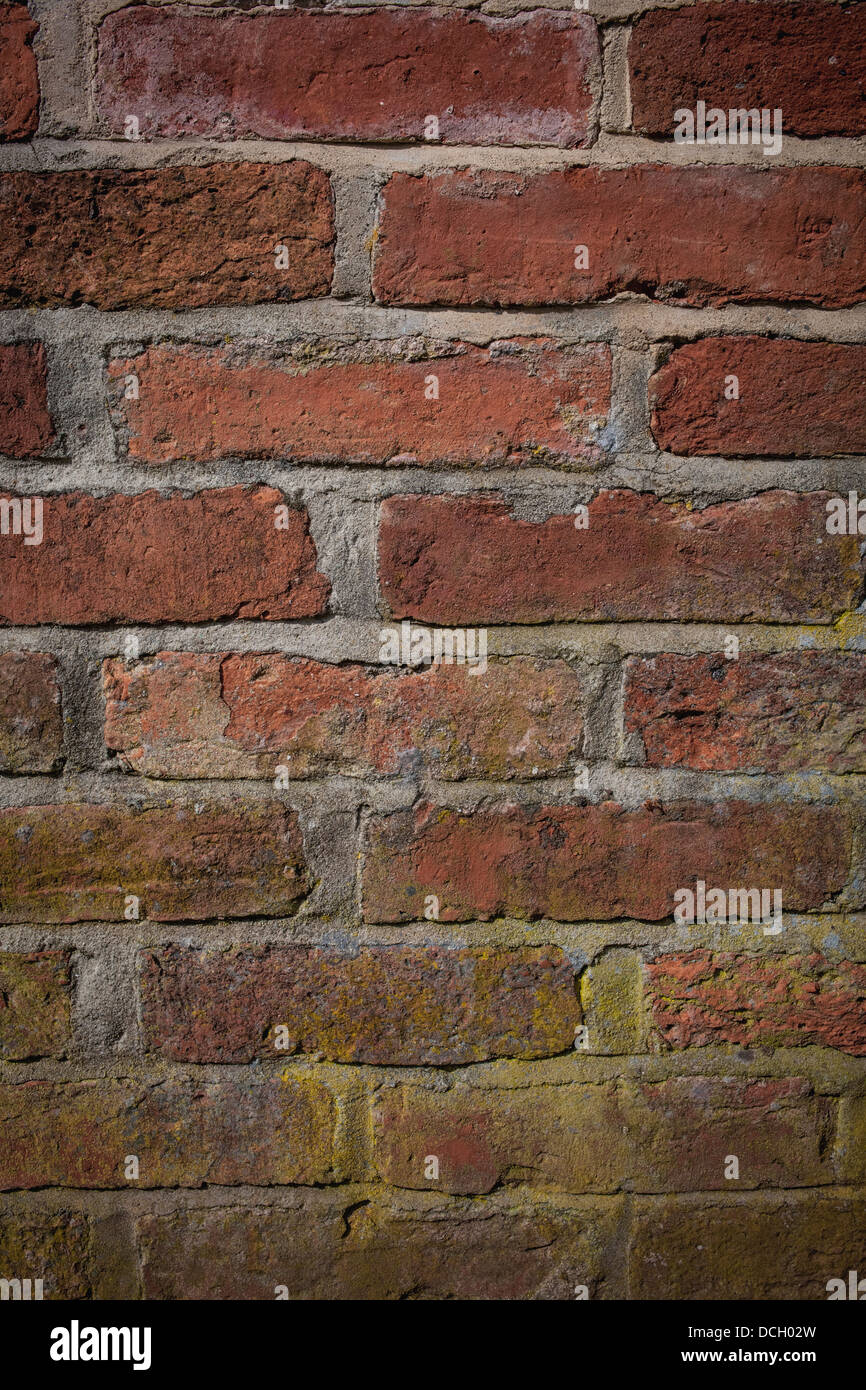 Brick wall with mould - Stock Image