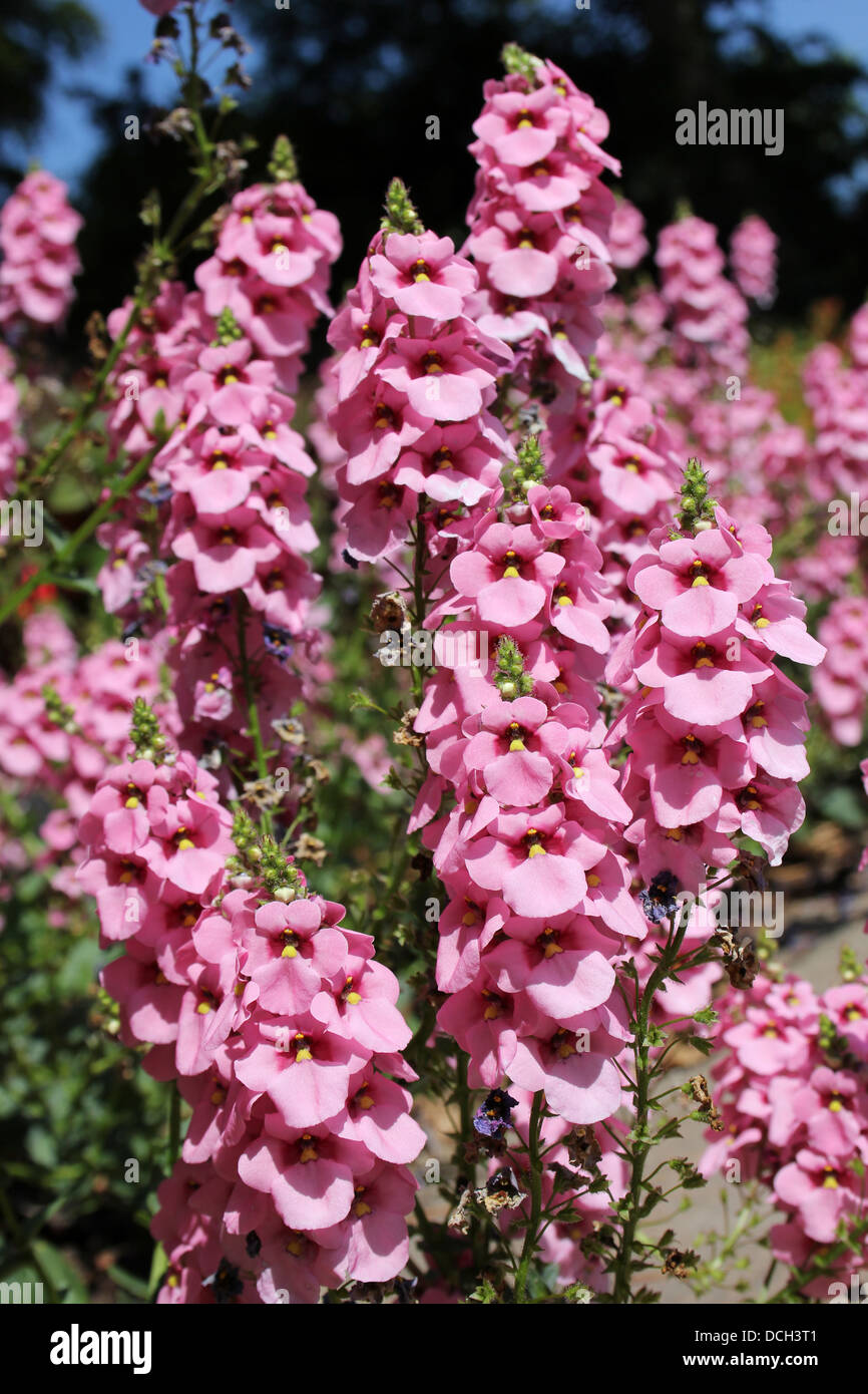 Flowers Flower Plants Plant Pink Europe Stock Photos Flowers