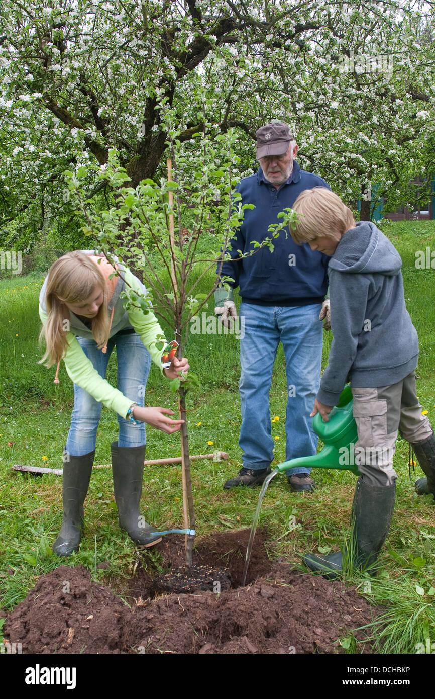 Apfelbaum Einpflanzen