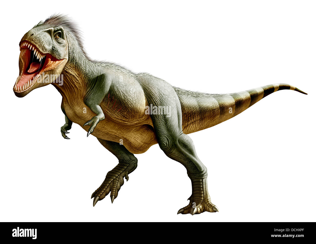 Tyrannosaurus Rex, a genus of coelurosaurian theropod dinosaur of the Upper Cretaceous period. - Stock Image