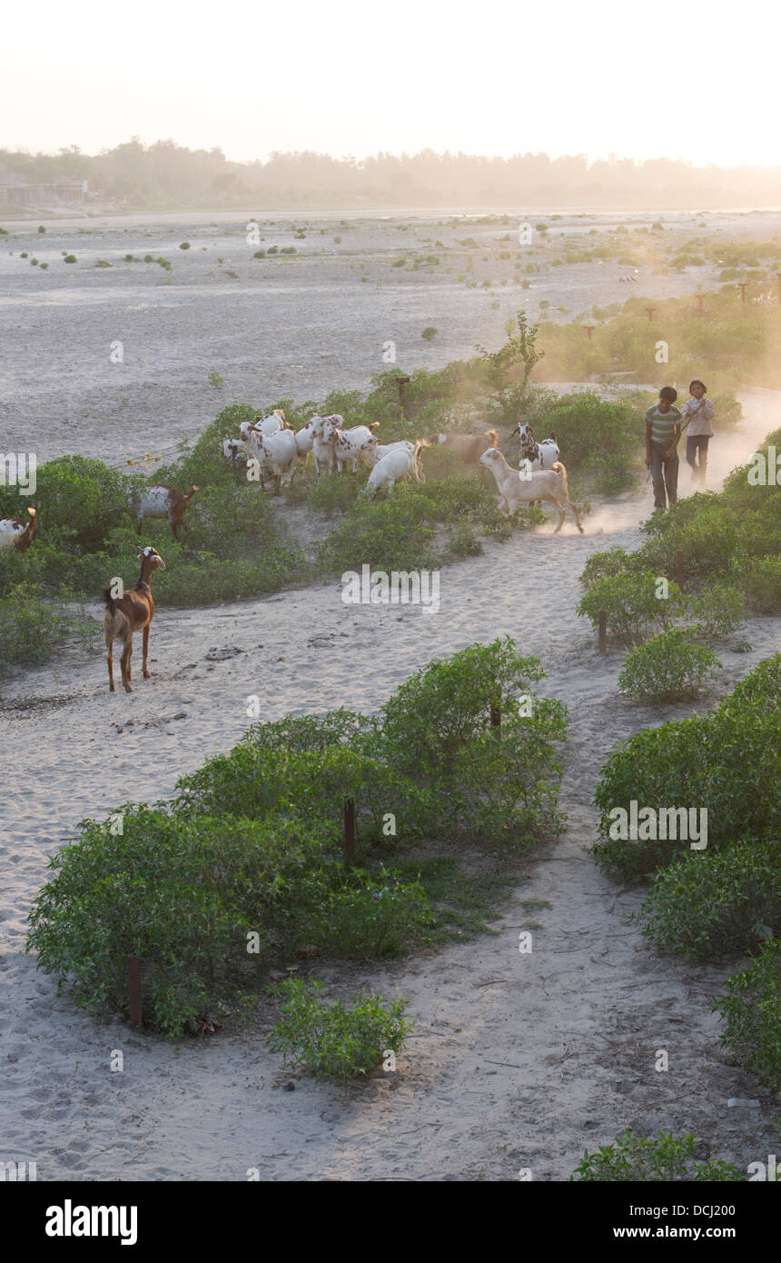 Young goat herders on the banks of the Yamuna River at dusk / twilight. Agra, India - Stock Image