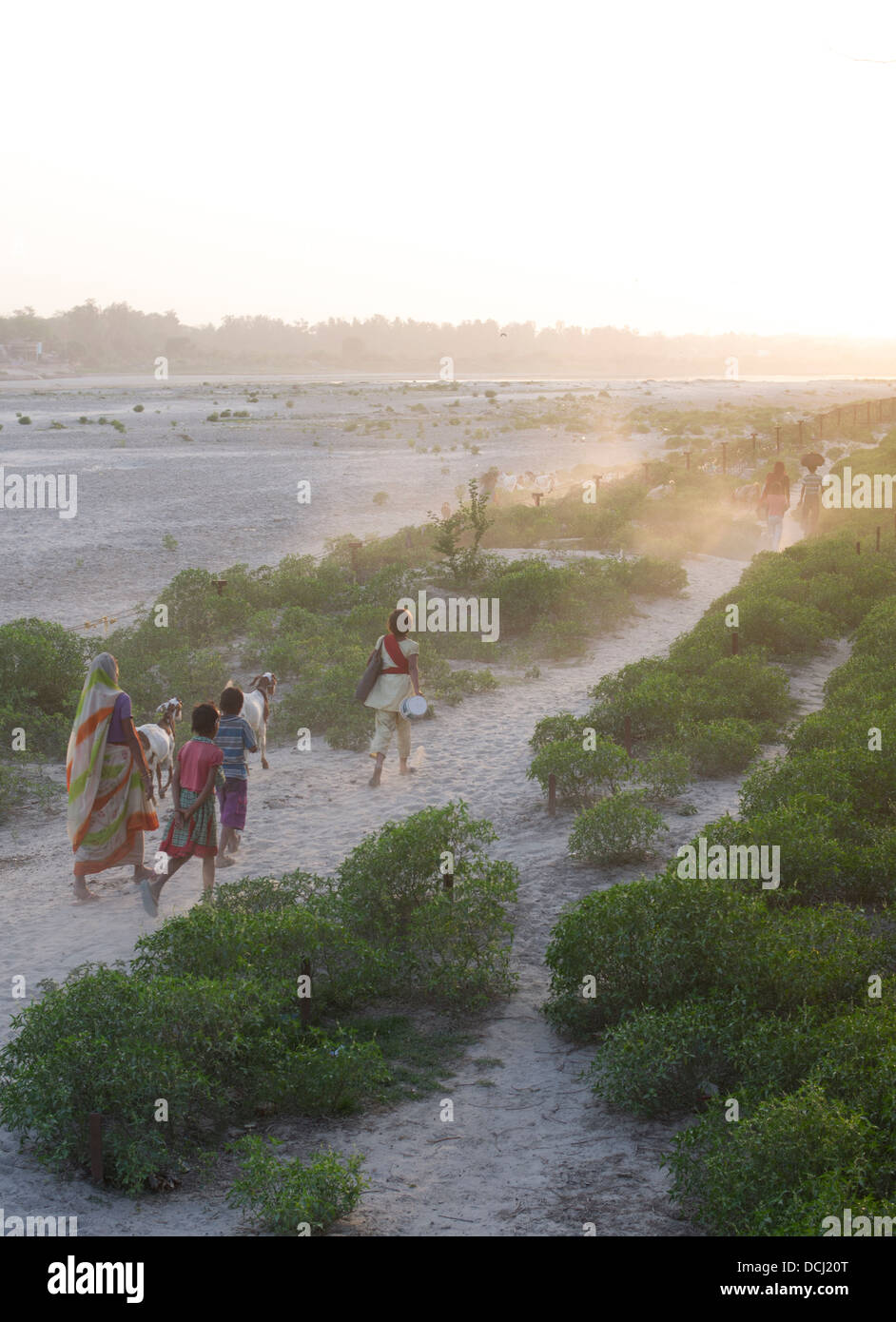 Indian woman and children walk along the banks of the Yamuna River at dusk / twilight. Agra, India - Stock Image