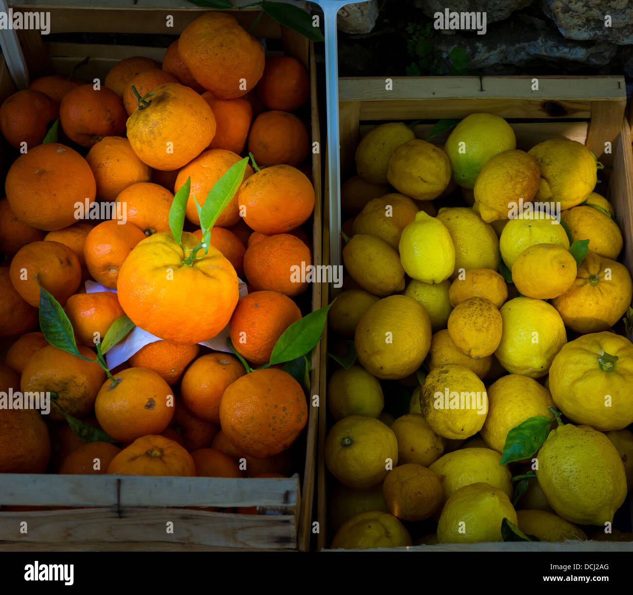 Fresh tree ripe oranges and lemons for sale in Saint-Paul-de-Vence in southern France - Stock Image