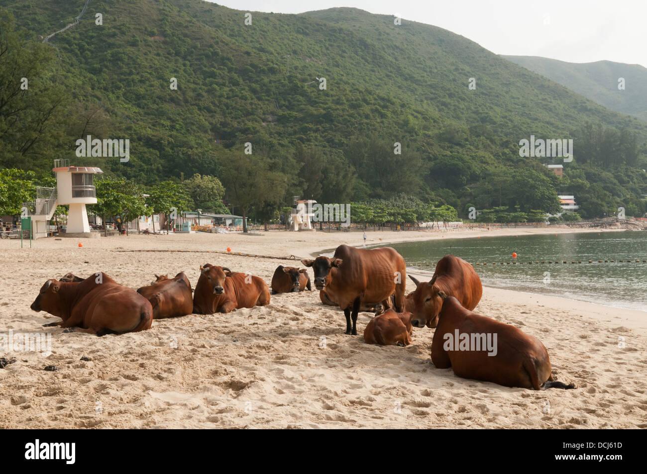 from Francisco mui wo gay beach