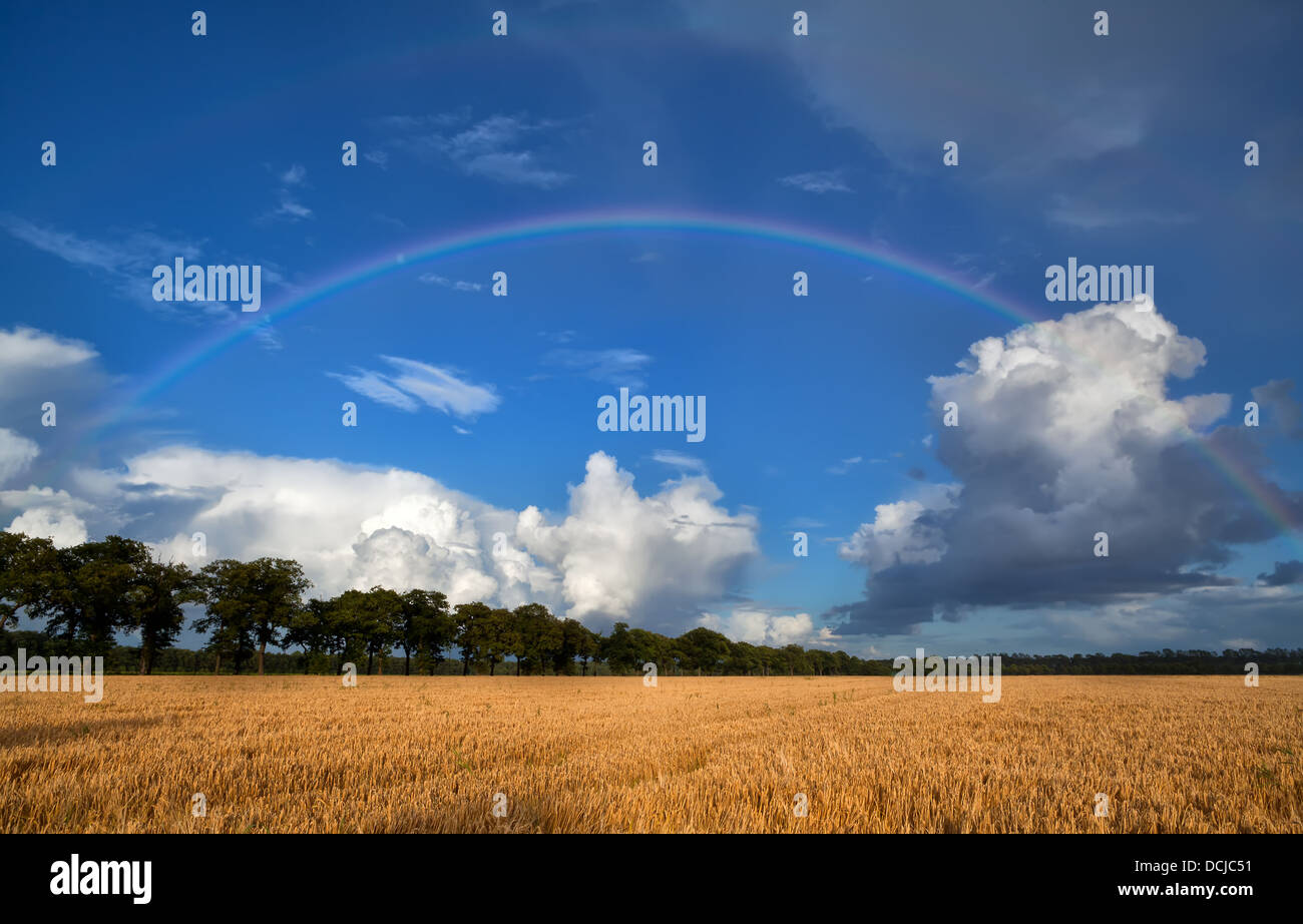 rainbow over wheat field after summer rain - Stock Image
