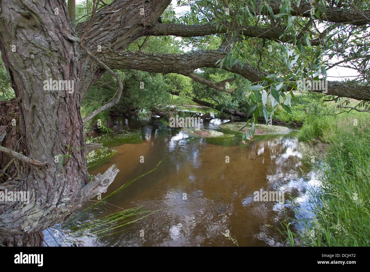 Brook, river, rivulet, stream, Naturnaher Flachlandbach, Bach, Fluß, Fluss - Stock Image