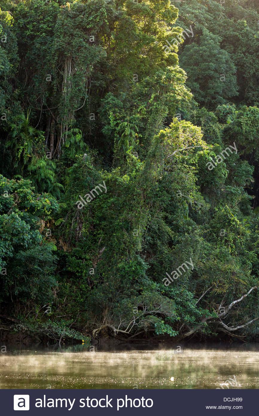 Daintree river - Queensland - Australia - Stock Image