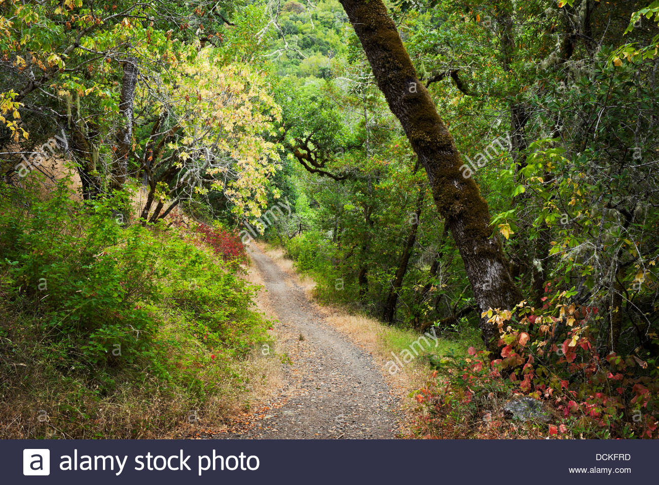 Cascade Canyon Open Space Preserve Hiking Trail, Fairfax, California - Stock Image