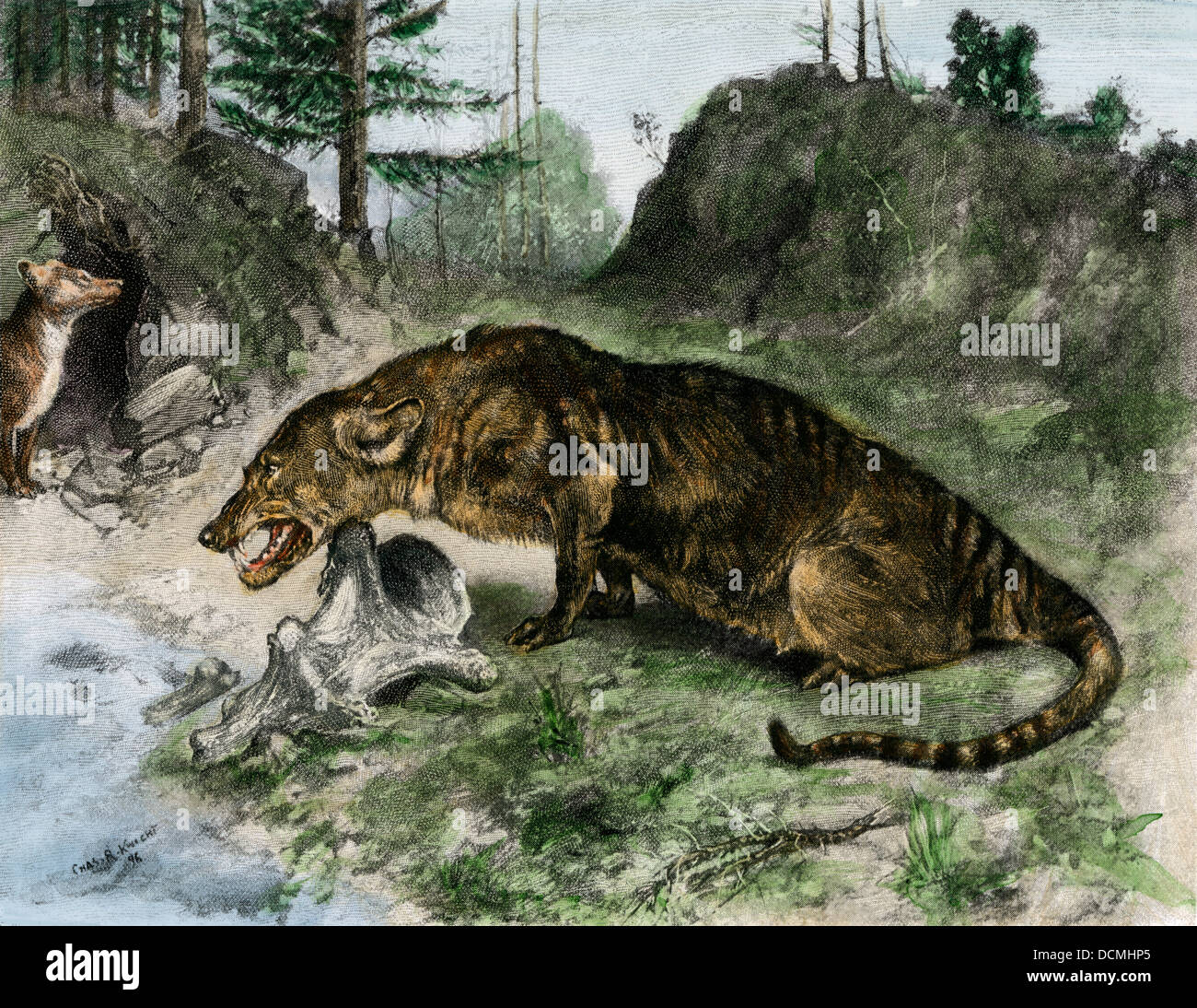 Mesonyx, an extinct large carnivore of Uintah Lake, UT, and Wyoming. Hand-colored halftone of a Charles Knight illustration - Stock Image