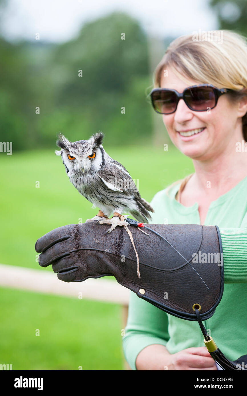 Woman with a Southern White-faced Owl perched on her glove on a falconry experience day. - Stock Image
