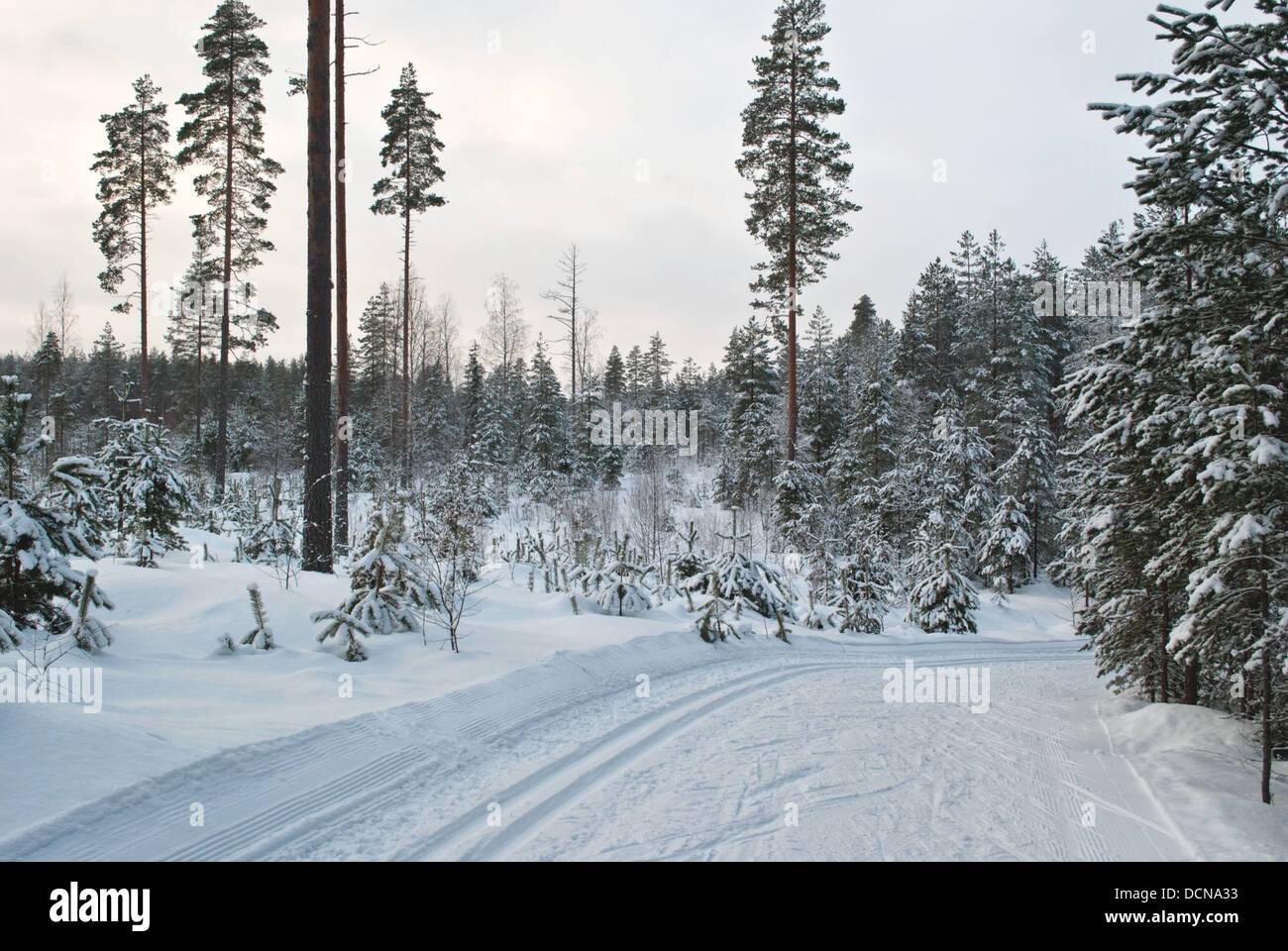 The ski-run ten miles in the sports center Vierumaki, Finland. - Stock Image