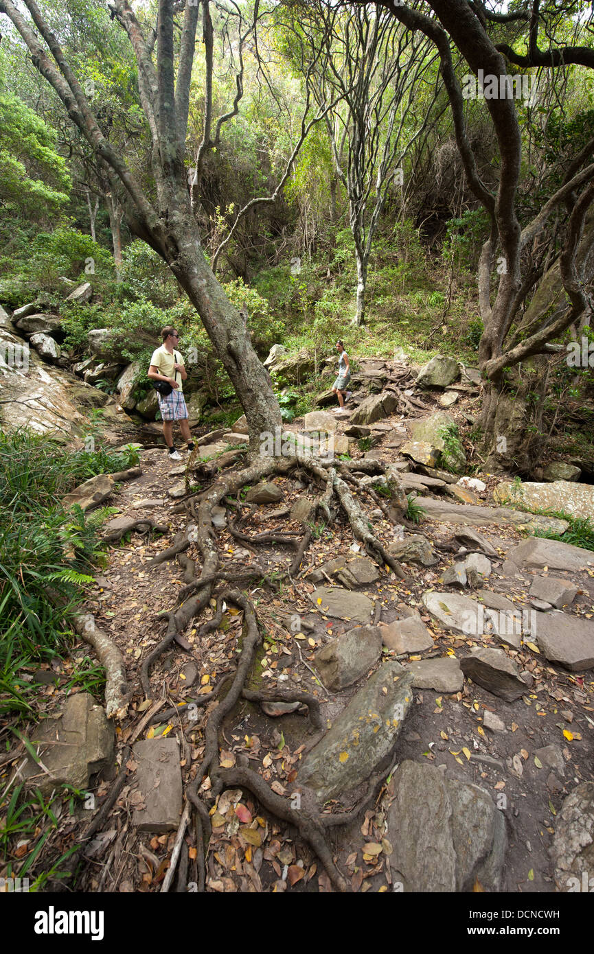 South Africa Tsitsikamma Forest Stock Photos & South Africa ...