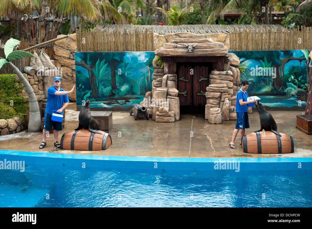 Seal Show At Ushaka Marine World Durban South Africa Stock Photo 59485577 Alamy