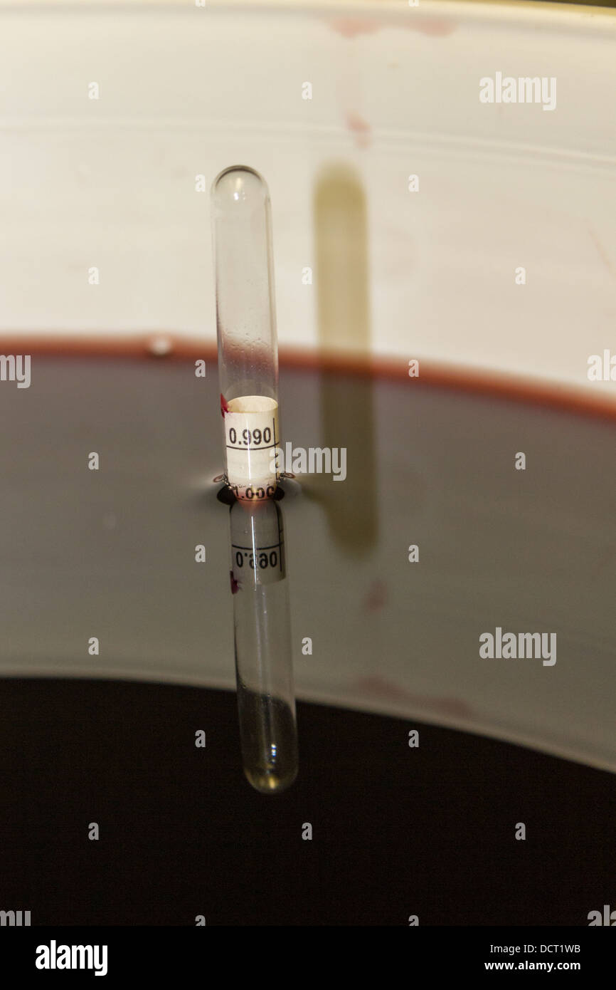 Using a hydrometer to determine specific gravity - Stock Image