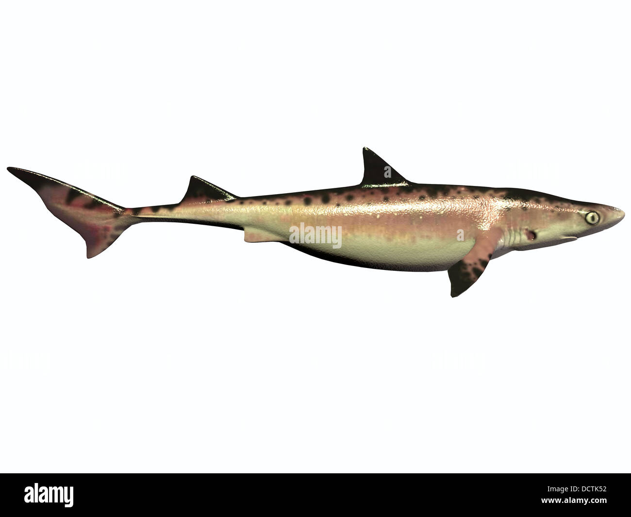 There were numerous species of shark during the Cretaceous Period of Earth's history which are now extinct. - Stock Image
