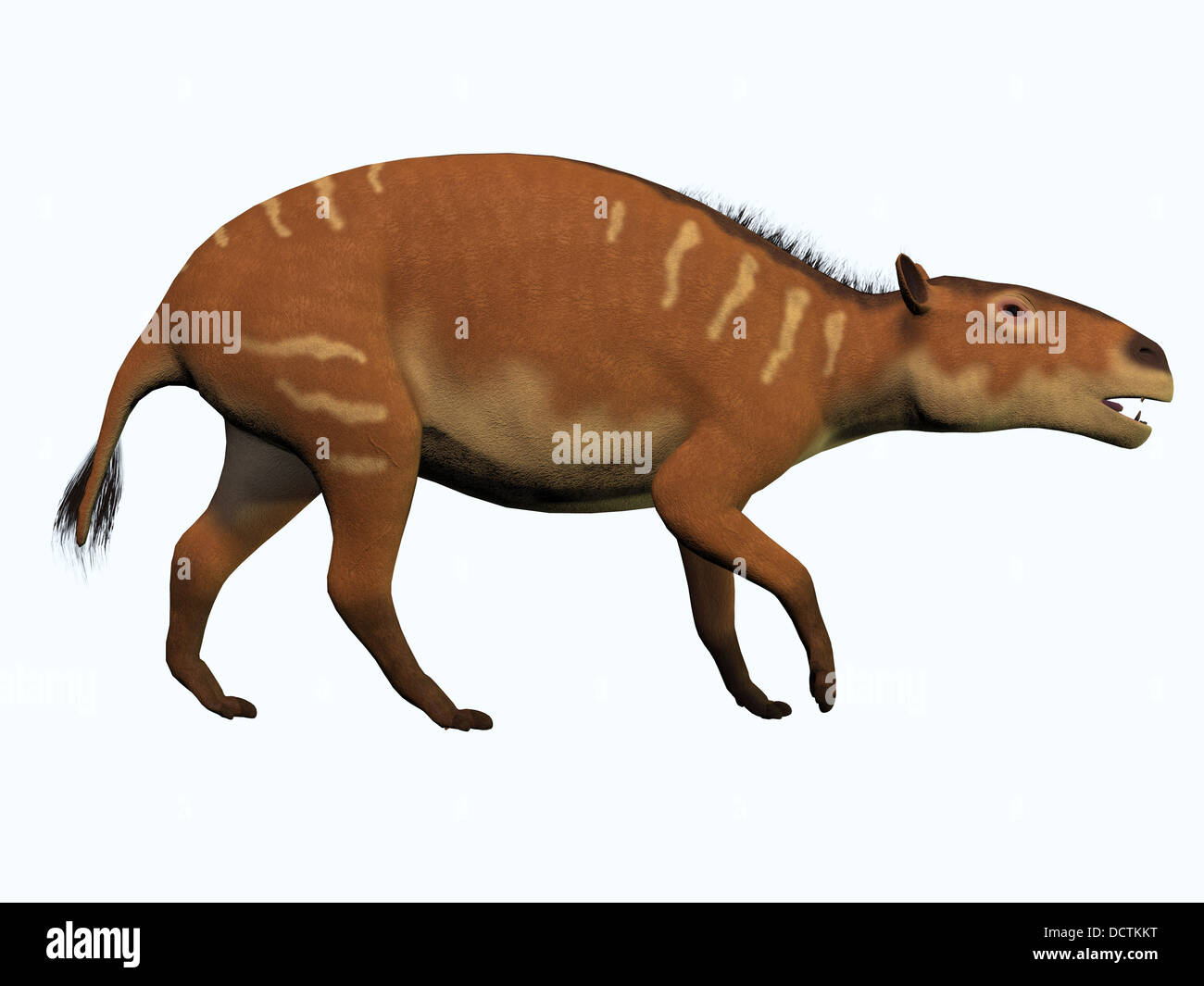 Eurohippus is one of the ancestors of the modern horse and lived in the Eocene Period in tropical forests of Europe. - Stock Image