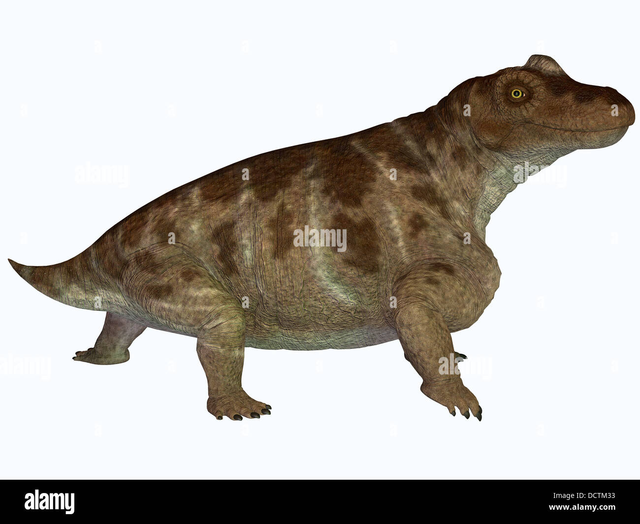 Keratocephalus was a semi-aquatic herbivore dinosaur that lived in the Permian Age of Africa. Stock Photo