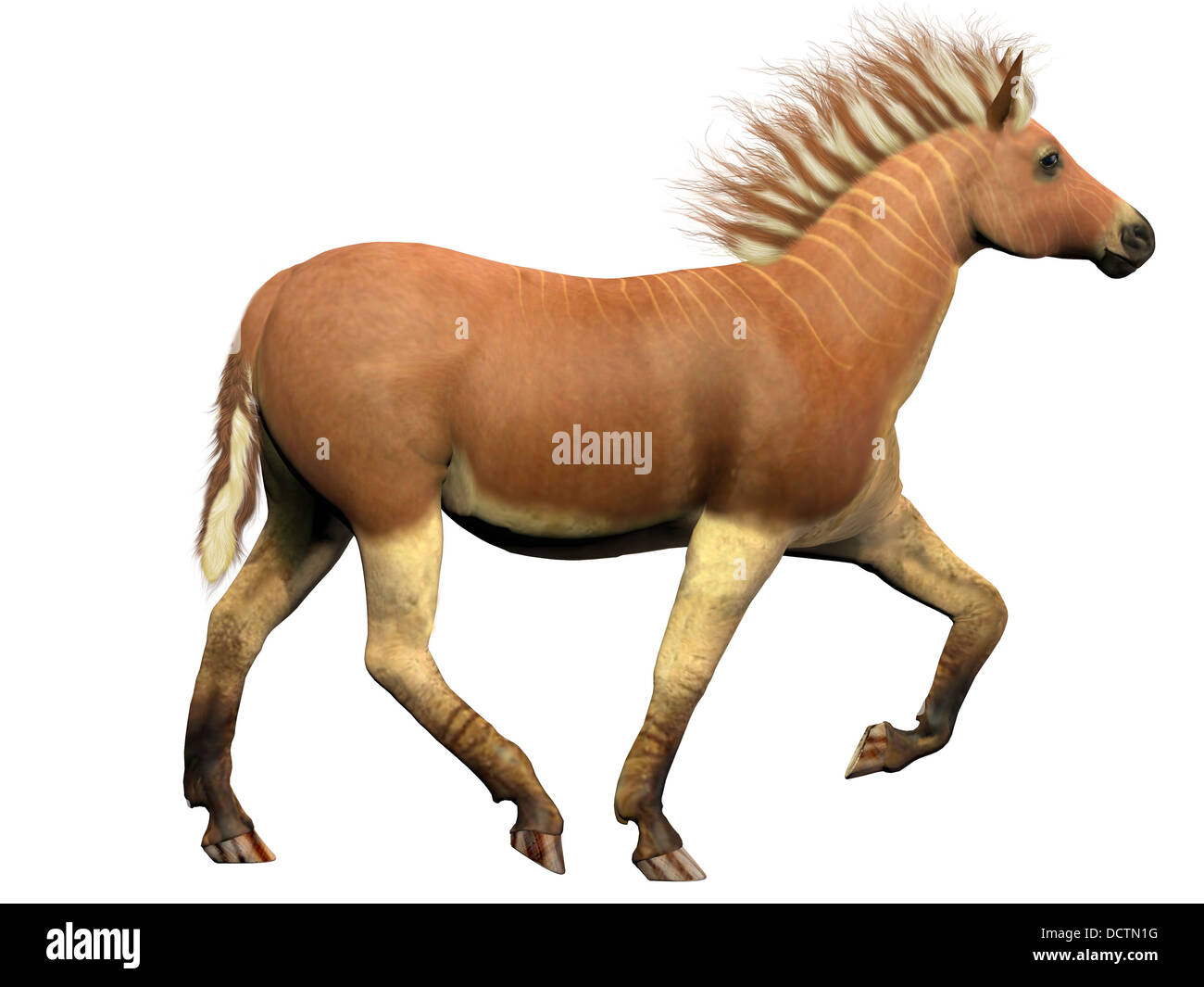 The Quagga species went extinct around 1870 and is more closely related to the zebra than the horse. - Stock Image