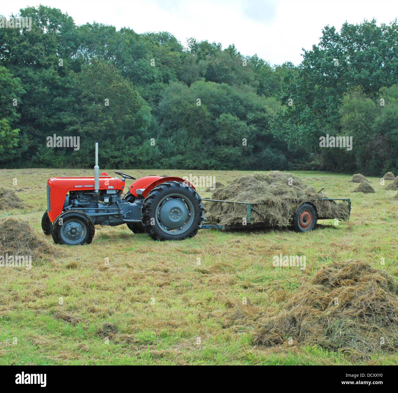 Massey Ferguson 35 tractor 1956 and still working daily - Stock Image