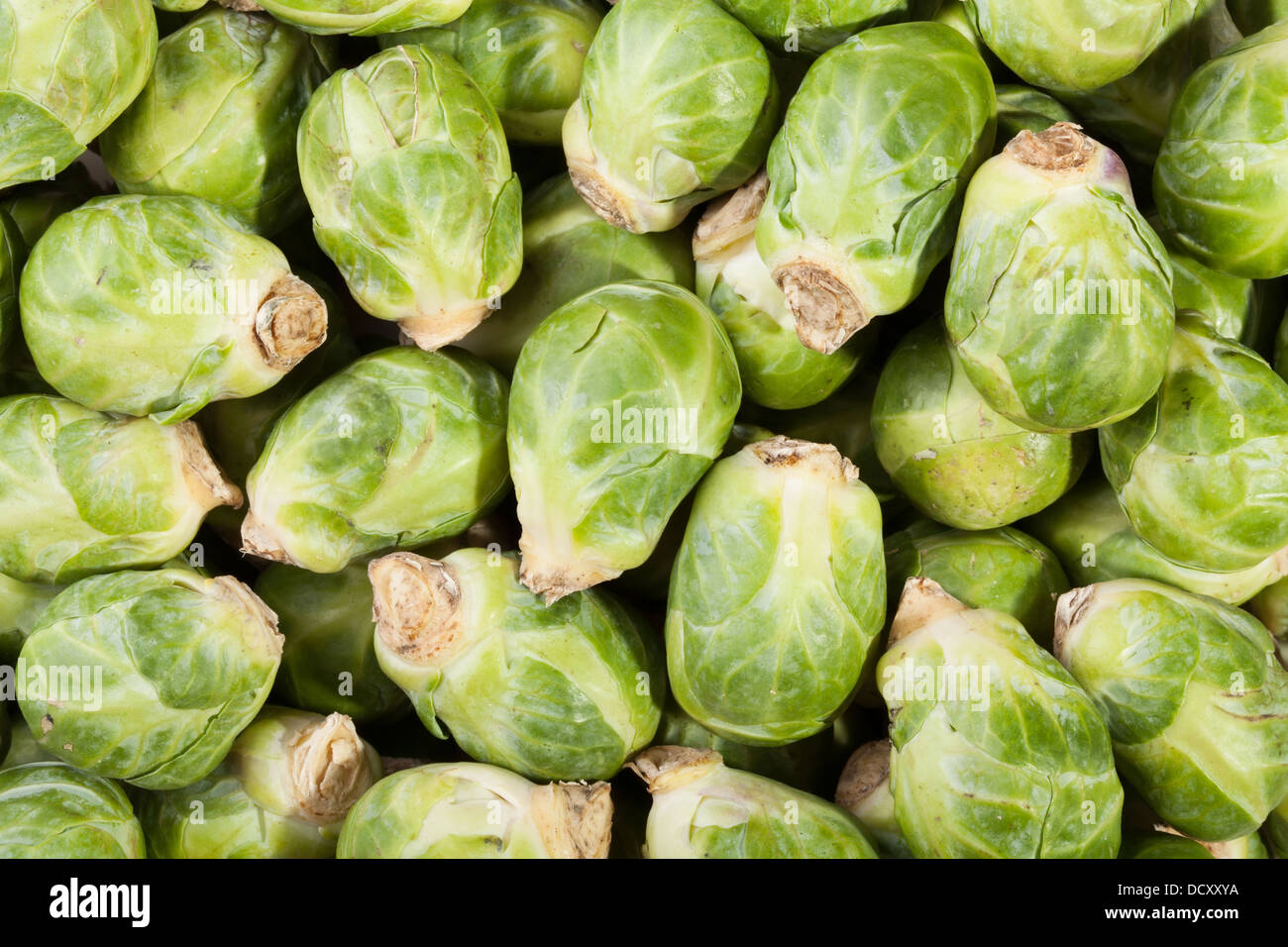 brussels sprouts many closeup background - Stock Image