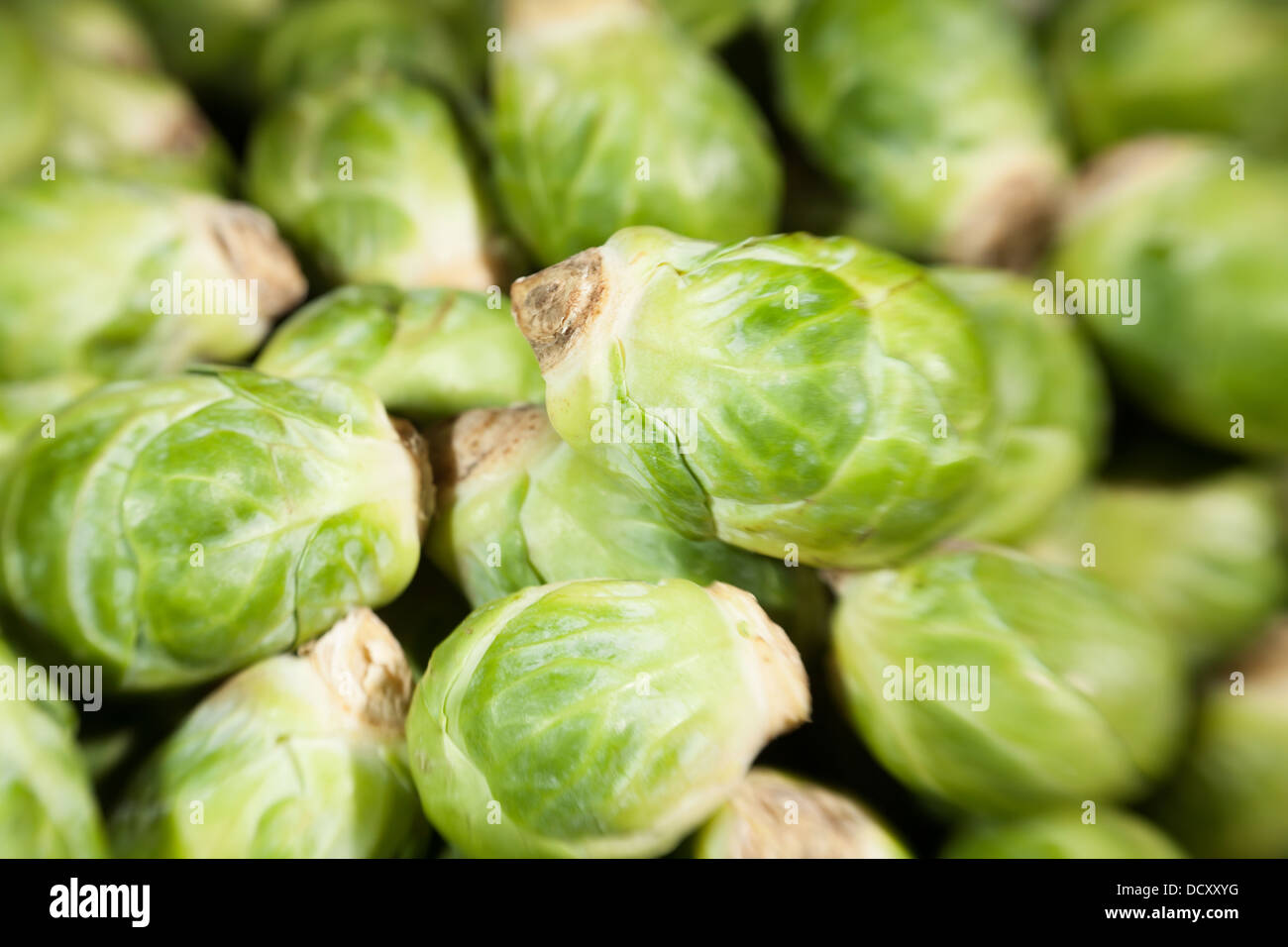 brussels sprouts many closeup macro blurry - Stock Image