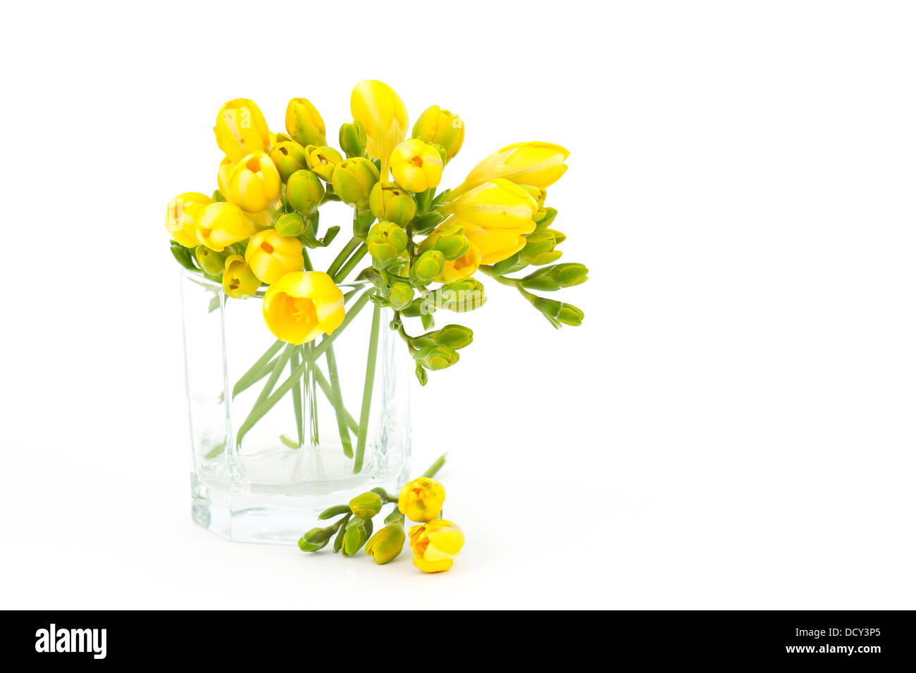 Yellow freesia flowers stock photos yellow freesia flowers stock yellow freesia flowers stock image izmirmasajfo
