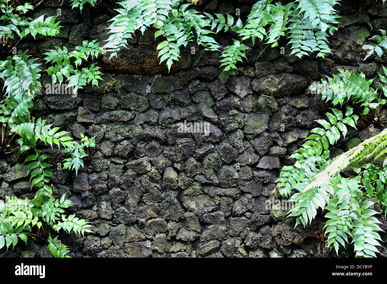 Moss And Fern On Stone Wall Jungle Tropical Forest