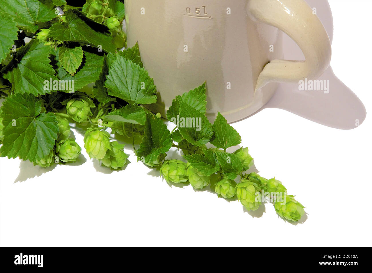 Traditional Stein Beer Mug with fresh twigs of Hops, one of beers main ingredients. Isolated on white. - Stock Image