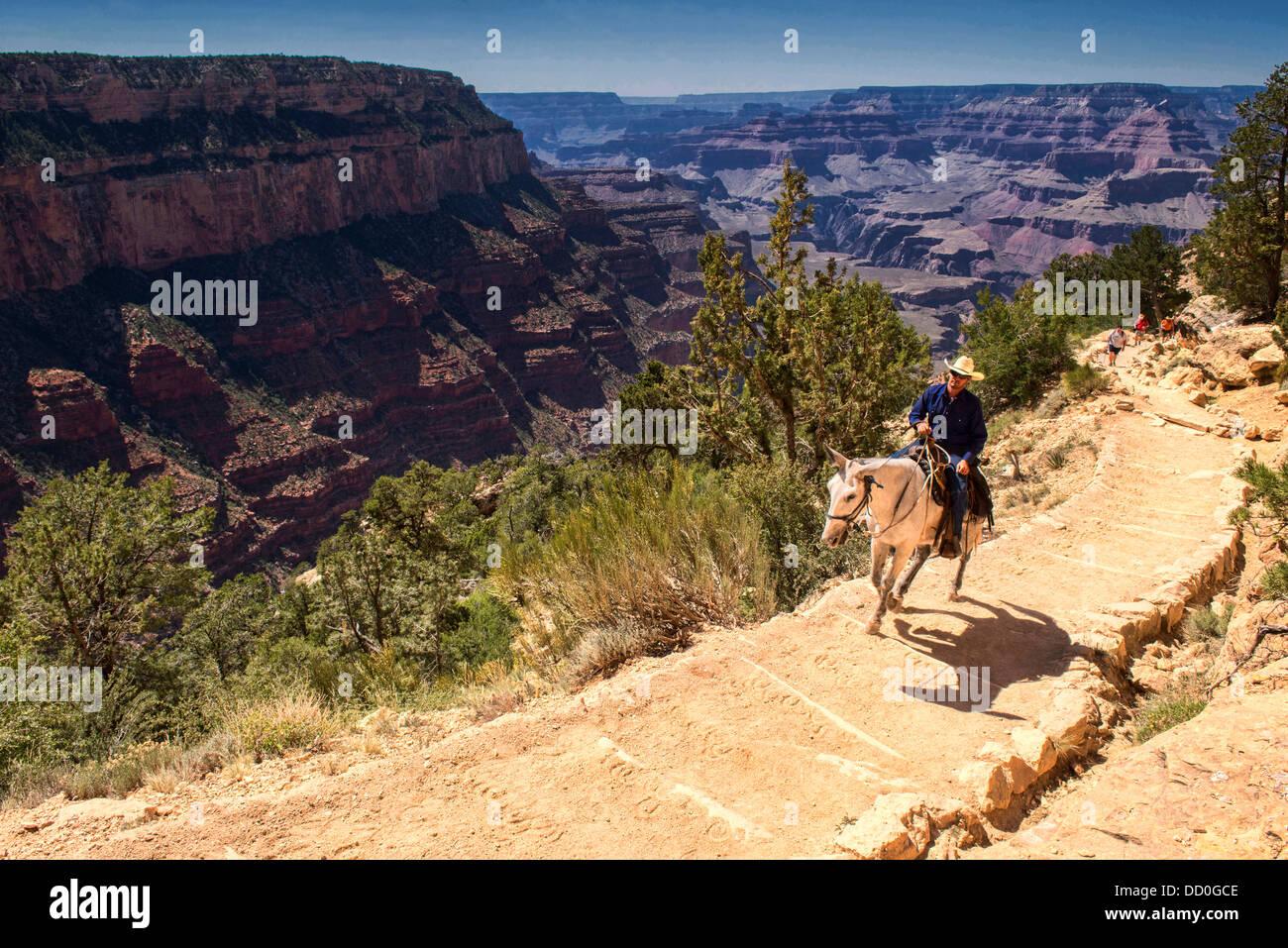 horse on the Kaibab Trail, Grand Canyon National Park, Arizona - Stock Image