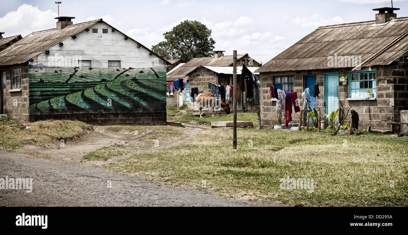 Nakuru town laundry hanging in front of brightly painted brick houses cow grazing in front nakuru kenya
