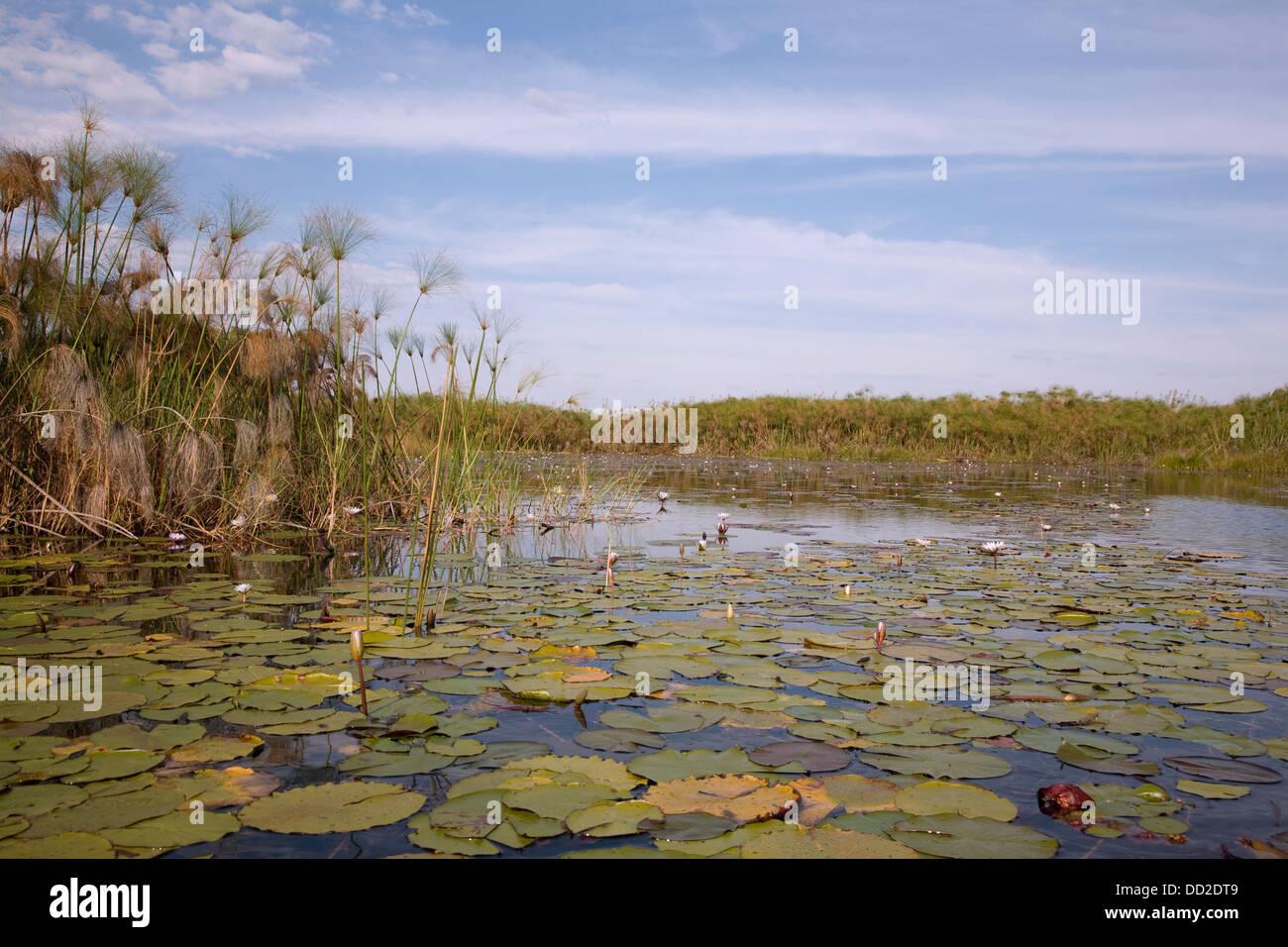 Western Okavango Delta - Stock Image