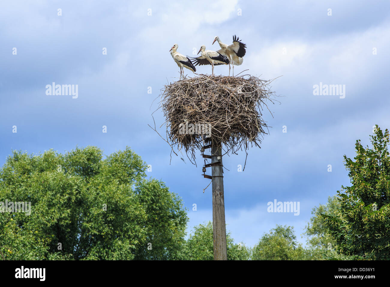 sky, symbol, clouds, showdown, high nest, young storks, maiden flight, view from the top of, the expectation of - Stock Image