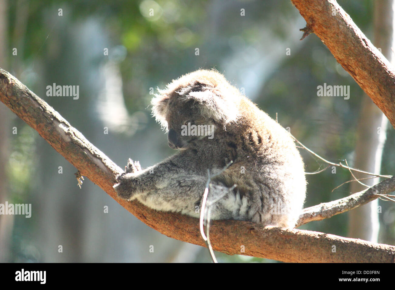 Animals, Tiere, Natur, Nature, - Stock Image