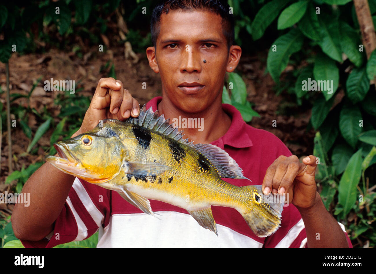 The Amazon River produces an amazing variety of fish--most Stock ...